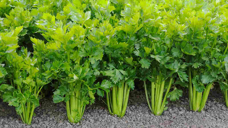 Celery: Why?