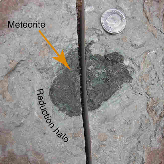 The meteorite is 3.1 by 2.6 by 0.8 inches large. It is surrounded by a gray reduction halo, in the otherwise red limestone. Oxygen was consumed when the meteorite weathered on the seafloor. The coin in the image has a diameter of just under 1 inch.