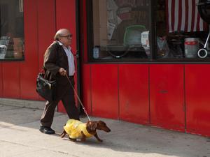 Dave (Danny DeVito) in Wiener-Dog.