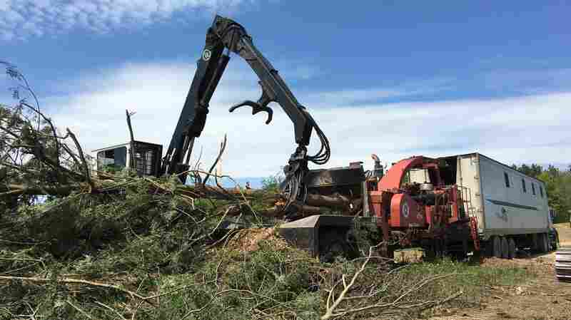 Is Burning Trees Still Green? Some Experts Now Question Biomass