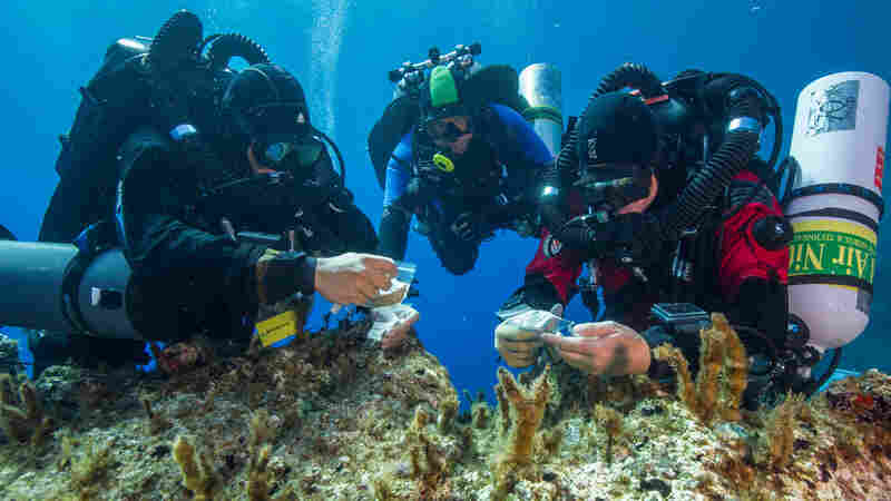 Antikythera team members Nikolas Giannoulakis, Theotokis Theodoulou, and Brendan Foley inspect small finds from the shipwreck, while decompressing after a dive of 165 feet beneath the surface of the Mediterranean Sea in Greece.