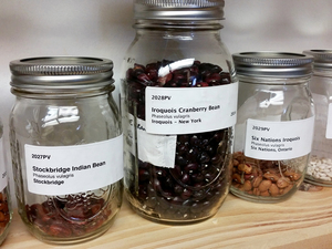 The seed library maintained by the Jijak Foundation contains dozens of native varieties of corn, beans, tobacco, watermelon and ancient squash.