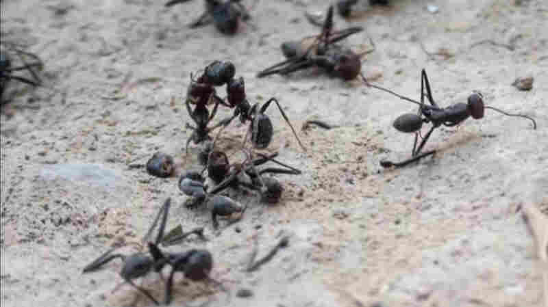 'Ant' Is A Movie About Ants — Or Is It?