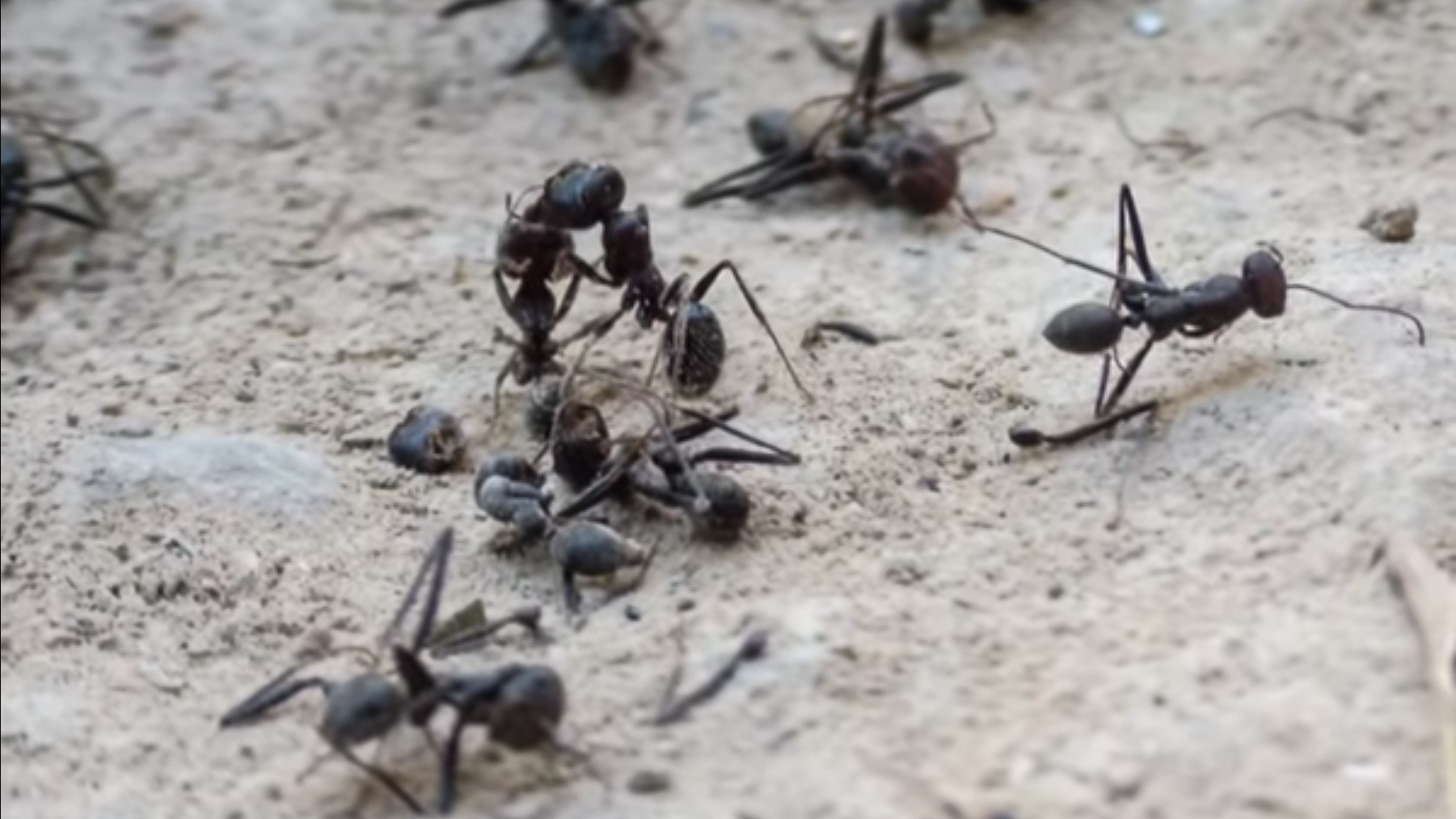 Tell me about movies about ants