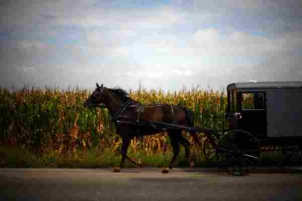 Though their farmland is exceptionally valuable, Amish families typically carry little debt and get around by horse and buggy.