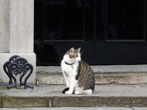 Prime Minister David Cameron's cat, Larry, sits on the steps of No. 10 Downing St. in London on June 24, the day Brexit voting results were announced. If the Cameron family wants to take Larry along on holiday to France, a Brexit could complicate plans. It's possible that traveling to and from the EU with pets will grow more cumbersome.
