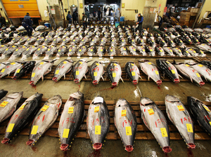 Tuna are arranged prior to the first auction of the year at Tsukiji Fish Market in Tokyo in January.