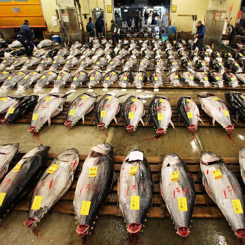 Tuna Fishing Countries Pledge To Recover Dwindling Pacific Bluefin