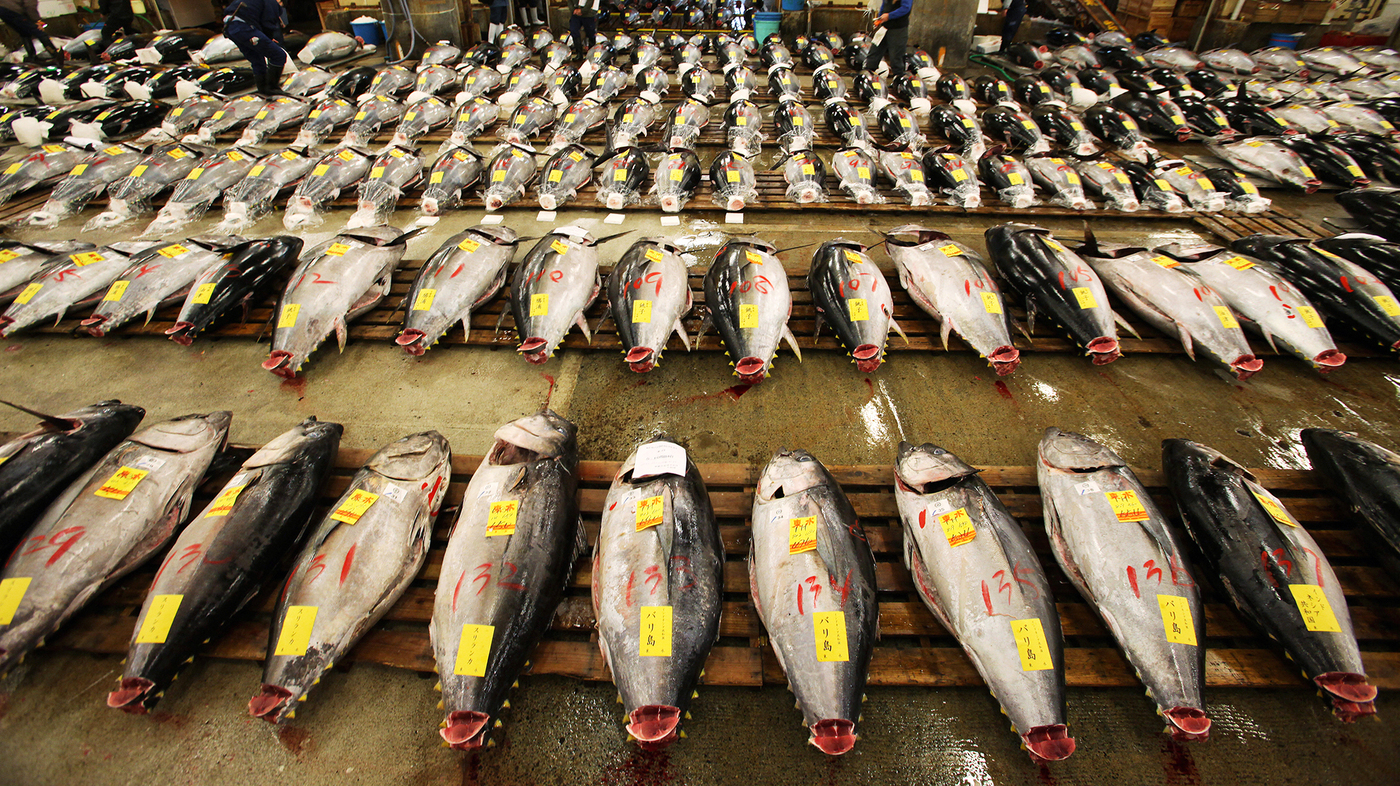 the effect of overfishing bluefin tuna Transcript of overfishing of tuna overfishing of the atlantic bluefin tuna  having not only a drastic effect on the balance of marine ecosystems but also on.