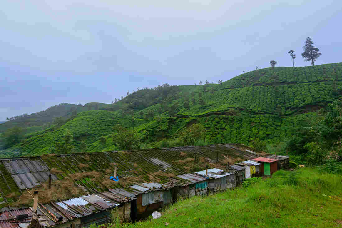 Workers on the tea estates of the Kanan Devan Hills Plantations Company in the Indian state of Kerala live in rent-free housing. Though the accommodations are rudimentary, they're considered a major benefit for employees.
