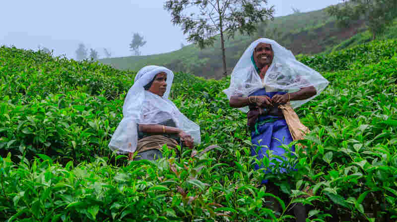 Female Tea Workers In One Indian State Fight For Their Rights