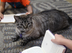 How could you evict that little face? Browser the public library cat has been reprieved and will stay on the job in White Settlement, Texas. Here, he sits among a group of children being read to.