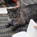 Library Cat's Job Is Saved