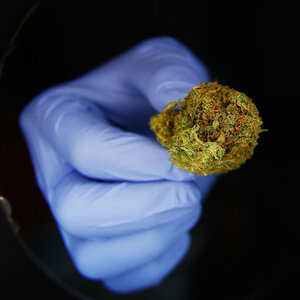 After Medical Marijuana Legalized, Medicare Prescriptions Drop For Many Drugs