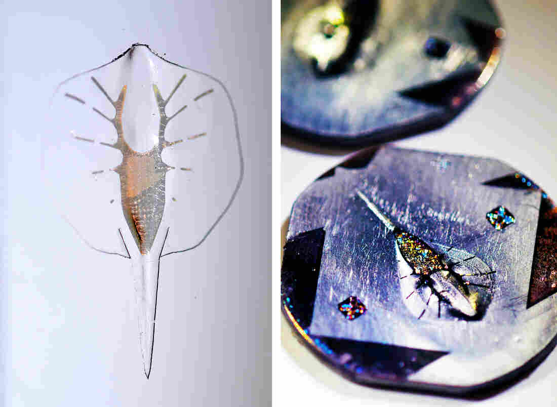 (Left) The tissue-engineered robotic ray, made of gold, silicone and live muscle cells. (Right) The titanium molds that scientists used to create the rays.