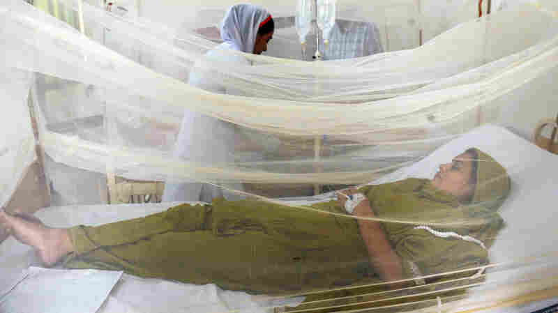 Report: Hotline In Lahore Helped Predict Surges In Dengue Fever