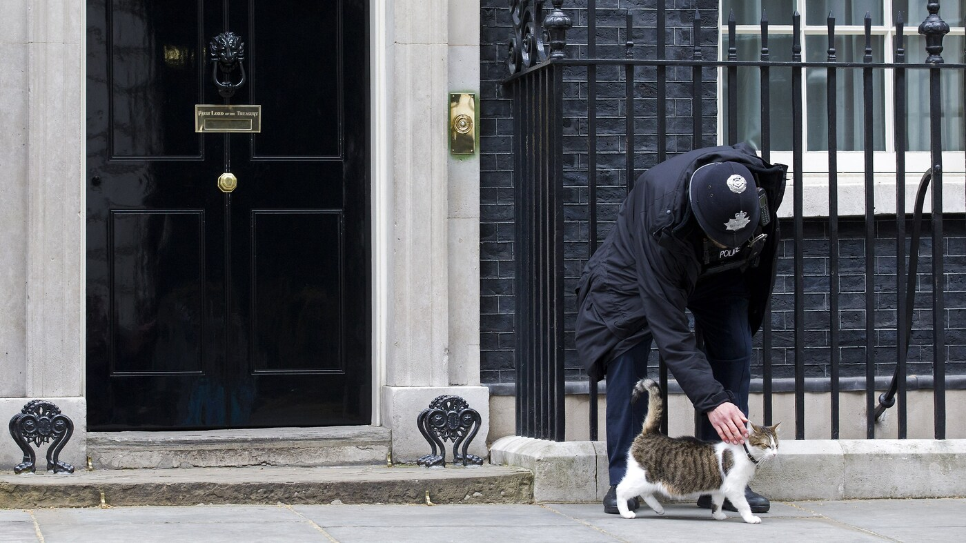 Larry The Cat Stays Put Amid Upheaval Of British Politics