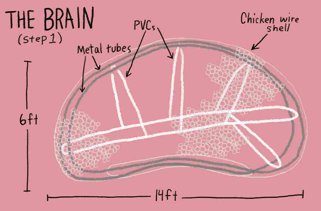 Drawing of the brain frame