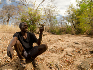 Yao honey hunter Orlando Yassene holds a male greater honeyguide temporarily captured for research in the Niassa National Reserve, Mozambique. The birds will flutter in front of people, tweet and fly from tree to tree to guide hunters to bees' nests that are hidden inside the trunks of hollow trees. This teamwork could date back thousands or even a million years.