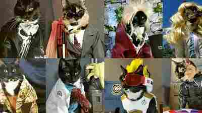 Some of the 50 costumes cat-cosplay.tumblr.com has released. Their creator, a Seattleite who goes by Freyu, began costuming his cats six years ago, for a Renaissance fair.