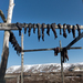 In Alaska's Remote Towns, Climate Change Is Already Leaving Many Hungry