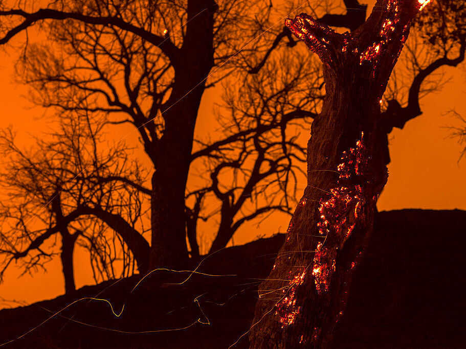 Embers fall from a burning tree in Placerita Canyon in Santa Clarita, Calif., on July 24. Triple-digit temperatures and dry conditions are fueling the wildfire.