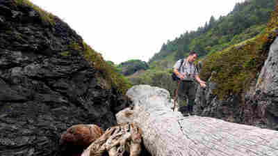 Michael Peterson, an archaeologist at Redwood National Park in California, photographs the coastline annually to monitor erosion of archaeological sites.