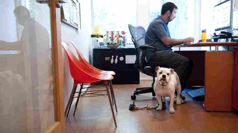 Who Let The Dogs In? More Companies Welcome Pets At Work