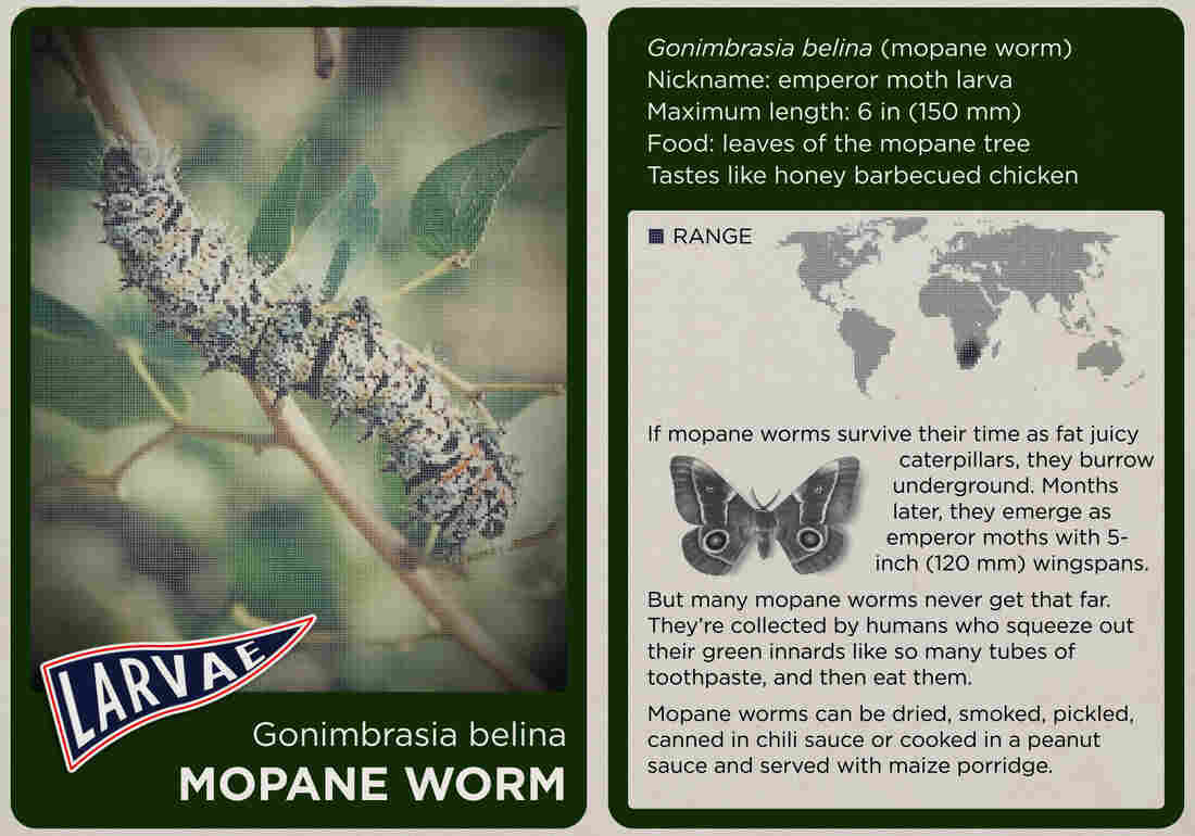 The mopane worm.