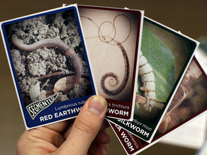 Worm trading cards!