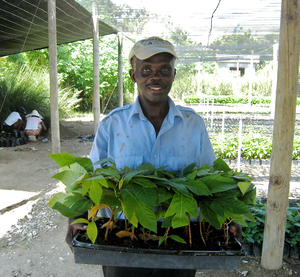 A Haitian man with a flat of breadfruit saplings delivered by the organization, Global Breadfruit.