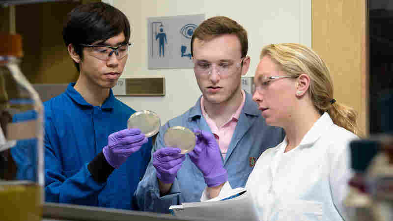 Young Inventors Work On Secret Proteins To Thwart Antibiotic-Resistant Bacteria
