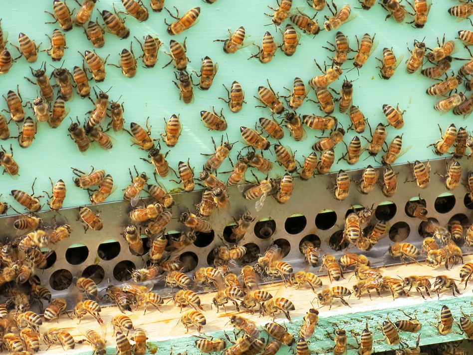 The Colony-Killing Mistake Backyard Beekeepers Are Making ...