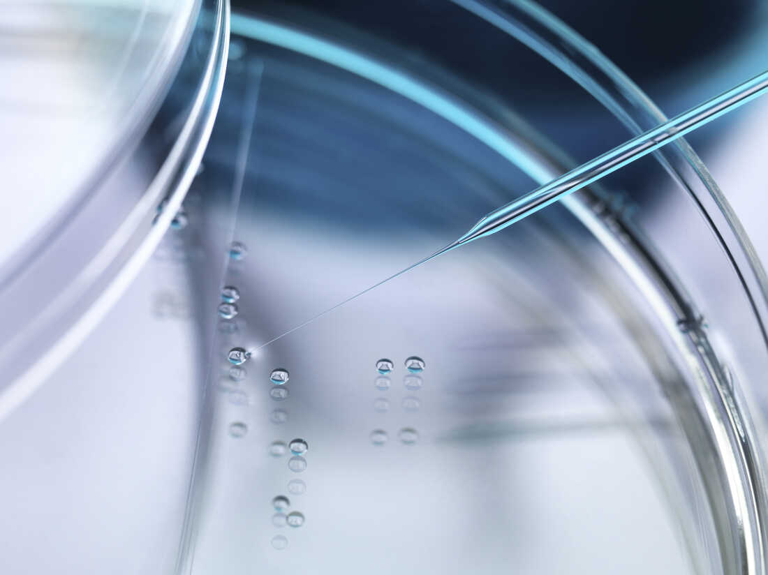 Nuclear transfer being carried out on several embryonic stem cells.