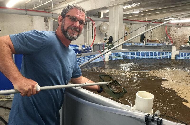 Shrimp Grown In Tanks Make A Splash, Coming To A Market Near