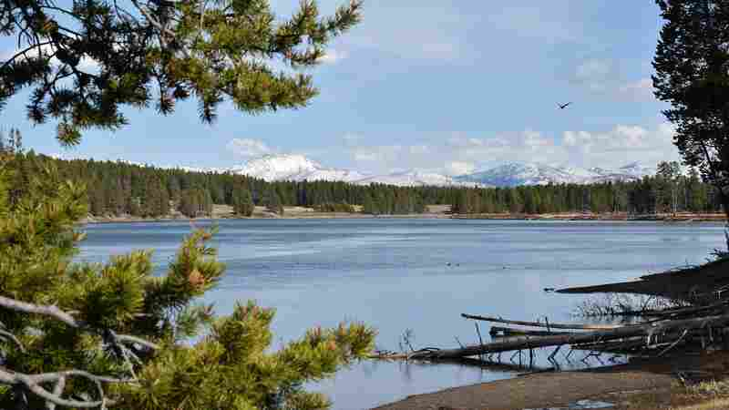 Montana Officials Close Yellowstone River To Fight Fish-Killing Parasite