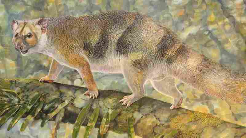 Extinct 'Micro Lion' Is Named For Sir David Attenborough