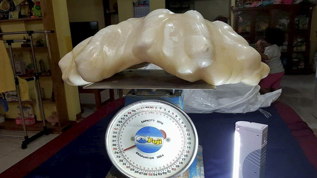 The fisherman's family says he found the pearl inside a giant clam near the island of Palawan and kept it under his bed. If confirmed, it would be far and away the largest natural pearl ever found.