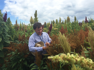 Matthew Blair, a researcher at Tennessee State University, examines different varieties of amaranth growing in the university's experimental fields.