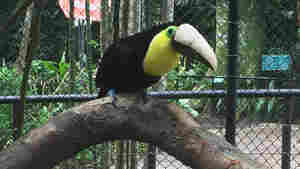 After Losing Half A Beak, Grecia The Toucan Becomes A Symbol Against Abuse