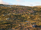 The lightning storm killed 323 reindeer on the Hardangervidda plateau in central Norway. The government estimates that about 2,000 reindeer live in the area.