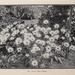 New York Botanical Garden/LuEsther T. Mertz Library/Biodiversity Heritage Library
