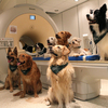Their Masters' Voices: Dogs Understand Tone And Meaning Of Words