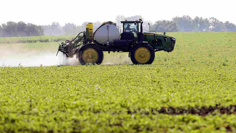 How GMOs Cut The Use Of Pesticides — And Perhaps Boosted It Again