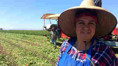 Why California's New Farmworker Overtime Bill May Not Mean Bigger Paychecks