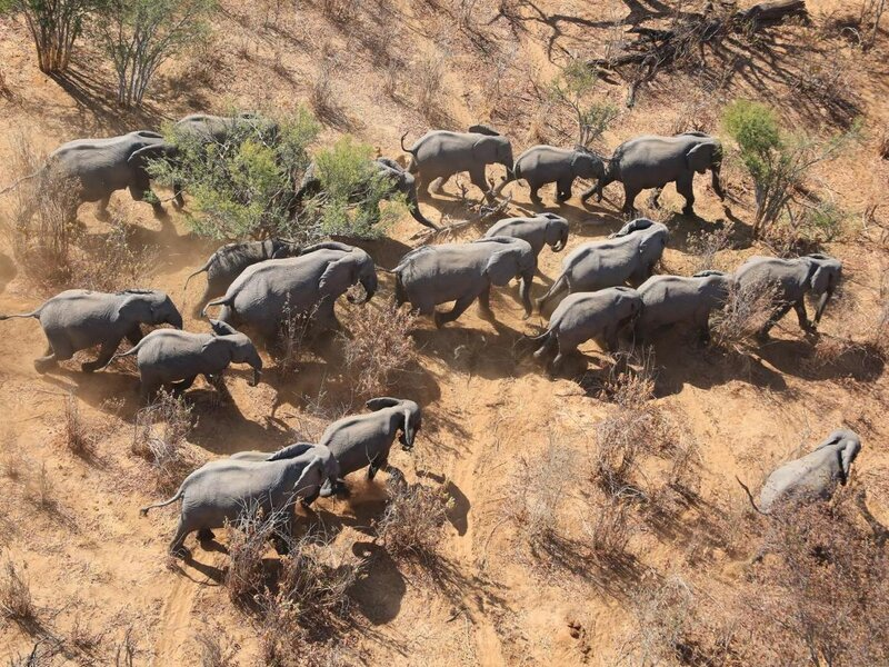 Aerial photo of herd of elephants