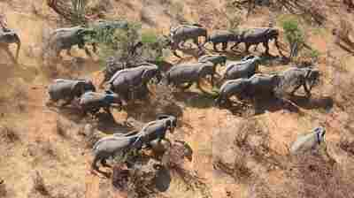 African Elephant Population Declines By 30 Percent