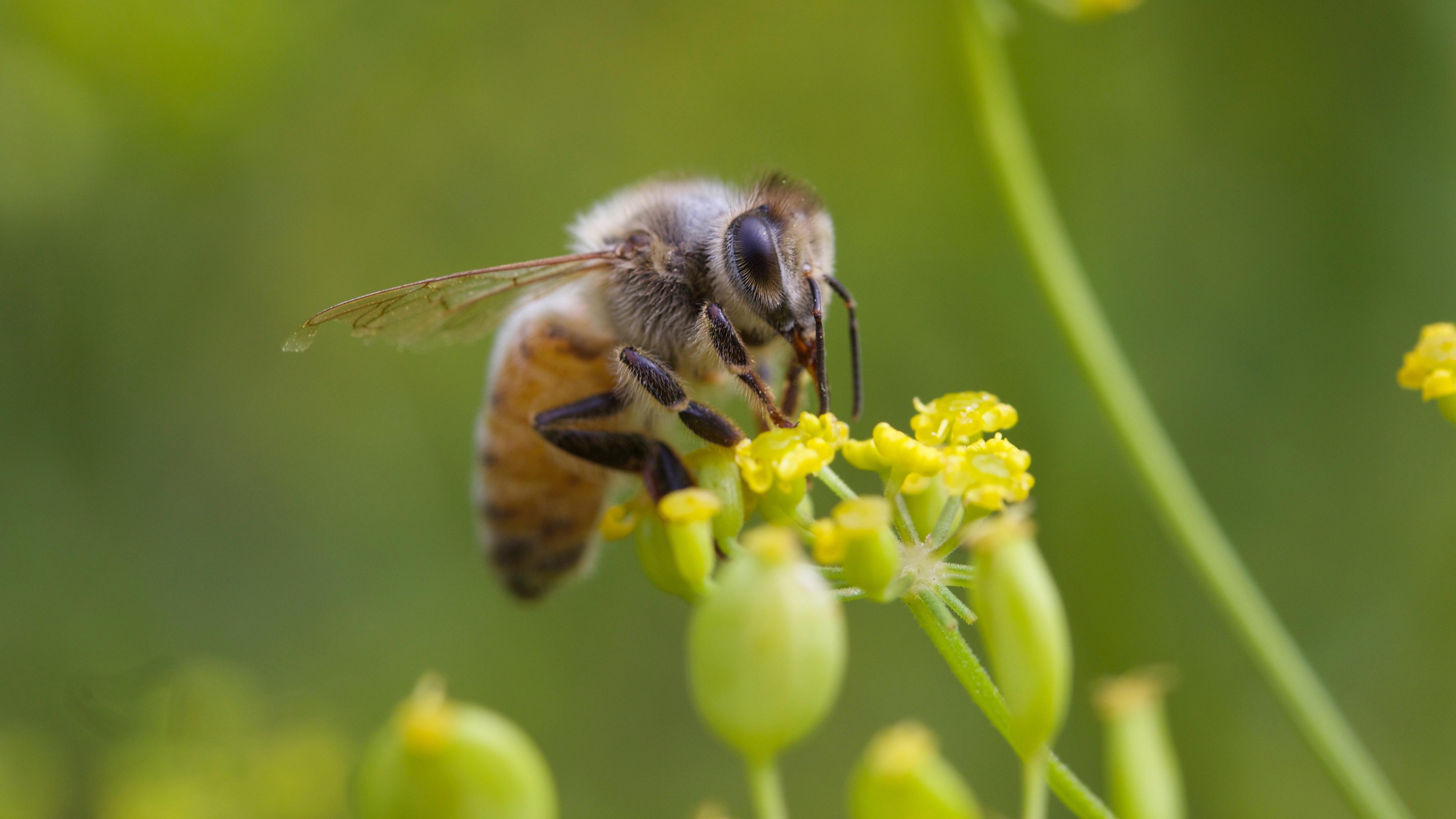 Collateral Damage: Bees die in South Carolina Zika spraying