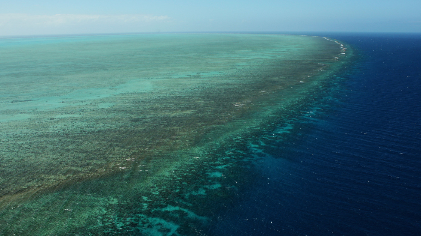 Massive 'Donut' Reef Discovered Behind Australia's Great Barrier Reef : The Two-Way : NPR