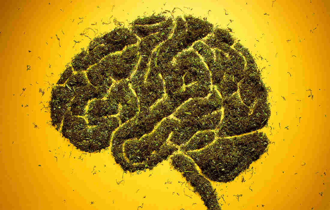 Brain made from herbs
